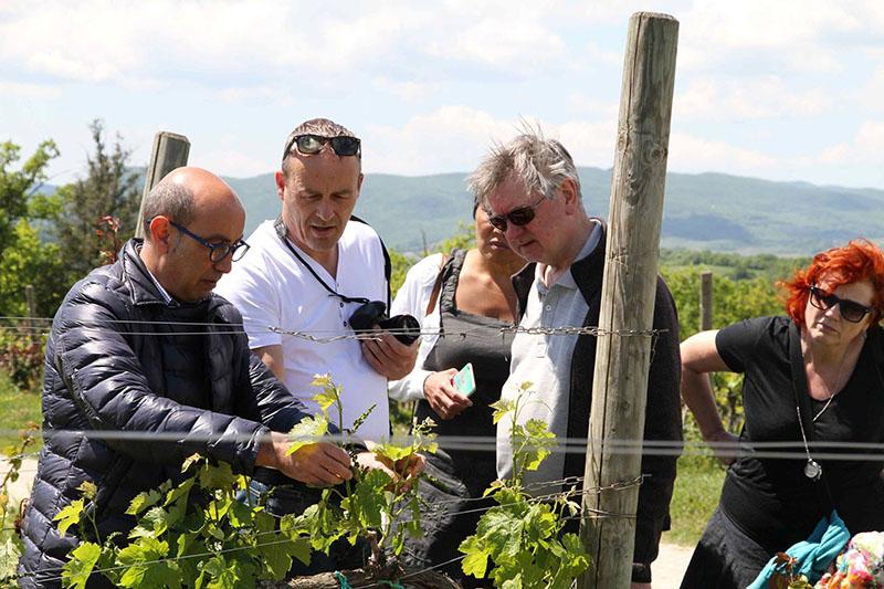 wine en food reis podere del buongustaio italie wijngaard