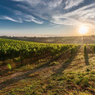 Proef het voorjaar in Umbrië | Wine & Food Reis